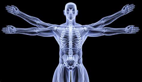 imagenes en 3d del cuerpo humano las curiosidades m 225 s fascinantes sobre el cuerpo humano