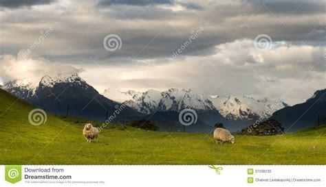 Landscape Photography New Zealand South Island Landscape Of New Zealand Stock Photos Image 37038233