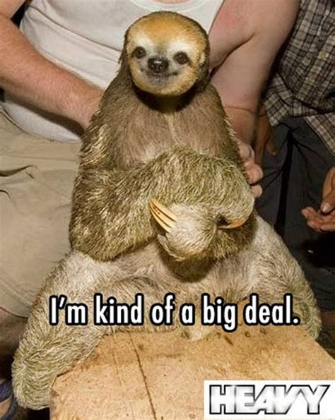 Funny Sloth Pictures Meme - the best of sloth memes 16 pics