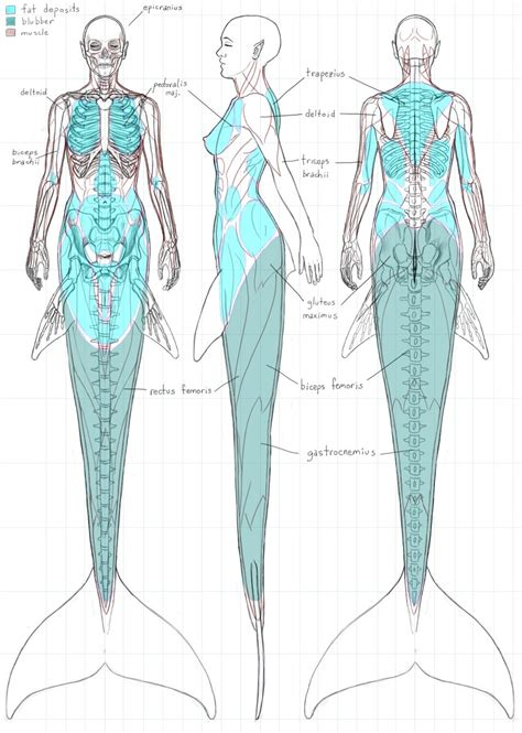 sub species of mermaids tail exles and anatomy