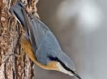 uccello simile al gabbiano uccelli pagina 6 mille animali