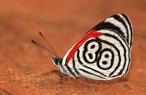 imagenes mariposas raras allpe medio ambiente blog medioambiente org la mariposa