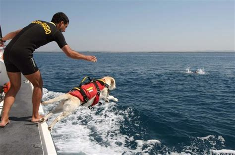 puppy finder rescue water search and rescue search and rescue dogs