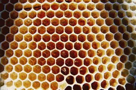 geometric pattern found in nature like a beehive 171 open by design