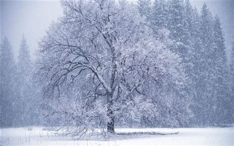 google images winter scenes pin by laurel gossage on frosty pinterest