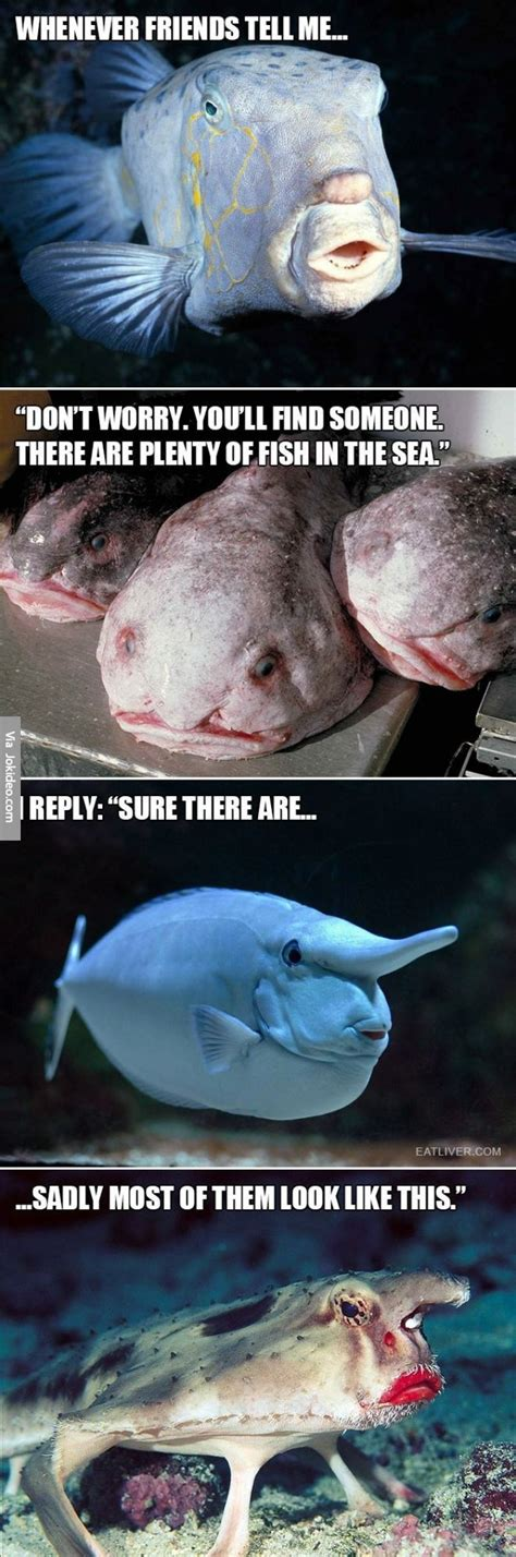 Funny Fish Memes - funny plenty of fish in the sea meme