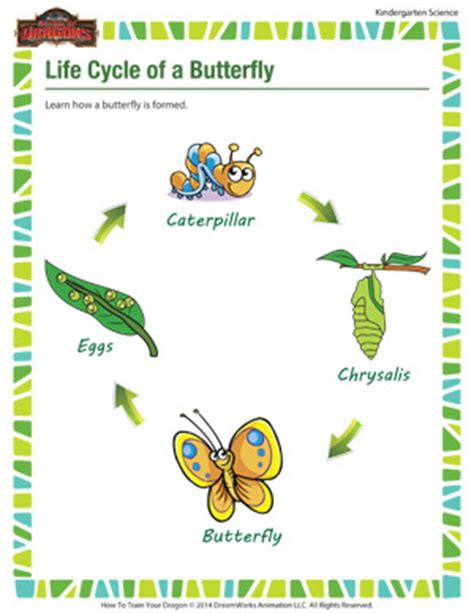 Cycle Of A Butterfly Worksheet For Kindergarten by Cycle Of A Butterfly Free Science Printables