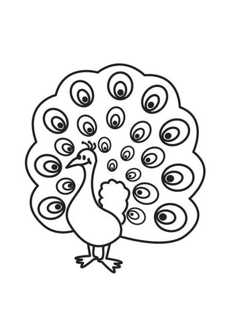 baby peacock coloring page 10 images of cute baby peacock coloring pages cute