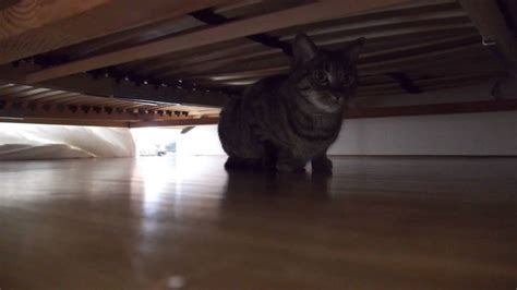 cat hiding under bed cat hiding under bed images