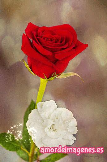 imagenes de flores en movimiento im 225 genes de rosas con movimiento y frases bonito grief