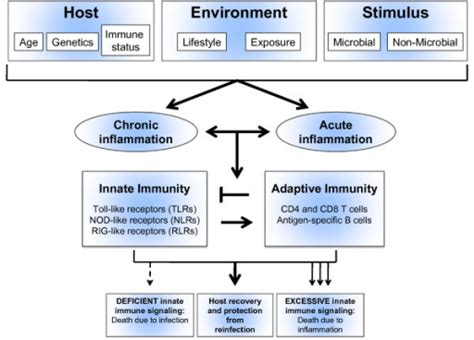 pattern recognition receptors in innate immunity host defense and immunopathology innate and adaptive immunity in acute and chronic lung