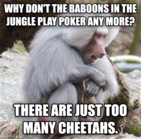 Baboon Meme - poker jokes kappit