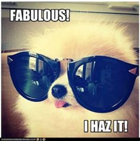 Dog With Glasses Meme - dog memes on pinterest dog memes funny pugs and pug