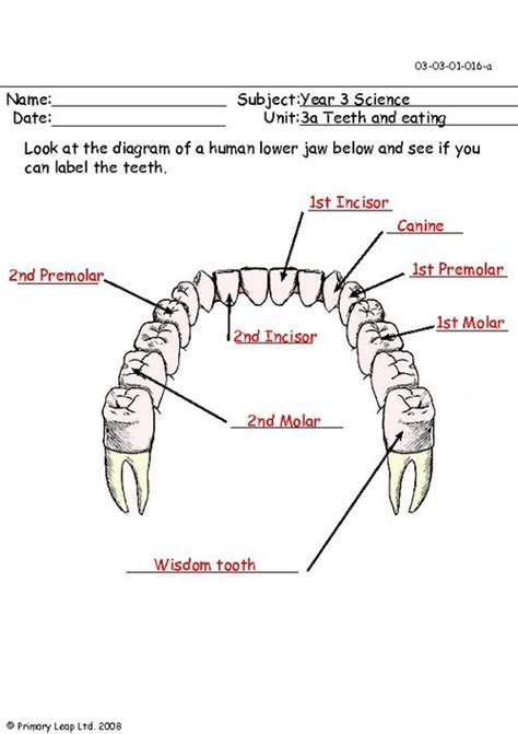 diagram of a tooth to label label the teeth in the lower jaw primaryleap co uk