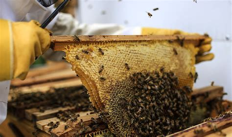 start a beehive in your backyard start a beehive in your backyard the dire state of the bee