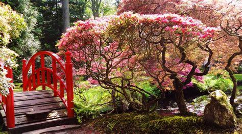 japanse tuin planten kopen japanse tuin clingendael hof van delfland