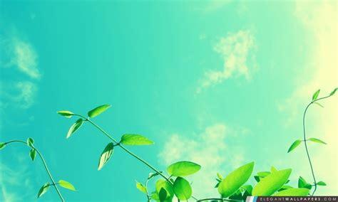 wallpaper anak ips vignes et ciel ensoleill 233 fond d 233 cran hd 224 t 233 l 233 charger