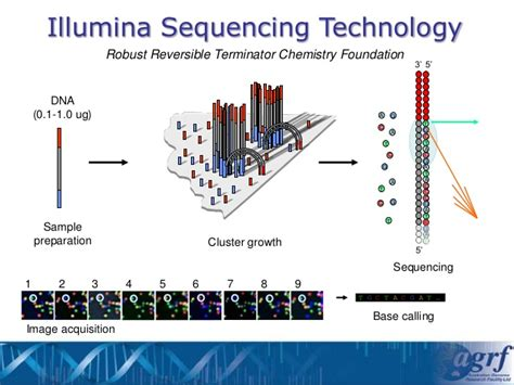whole genome sequencing illumina illumina shining a light on your dna technology and