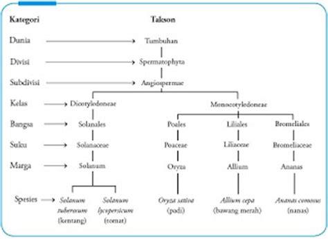 Sets Dunia Hewan Dan Tumbuhan sistem klasifikasi makhluk hidup pusat biologi