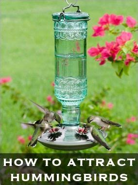 17 best images about hummingbirds are faeries on pinterest