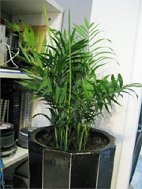types of houseplants that clean indoor air sustainable