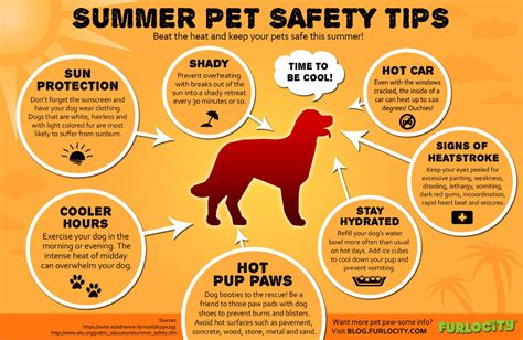9 Tips On Keeping Your Outside Pet Safe From The Cold by Summer Pet Safety Tips Visual Ly