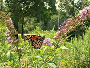 dundas valley outdoors urquhart butterfly garden a