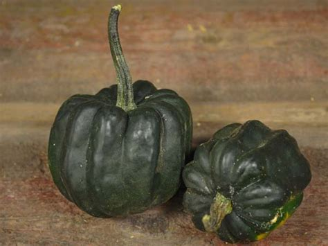 Table Squash by Table Acorn Squash Baker Creek Heirloom Seeds