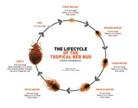 bed bugs solution midmos solutions offers tips on managing bed bug problems