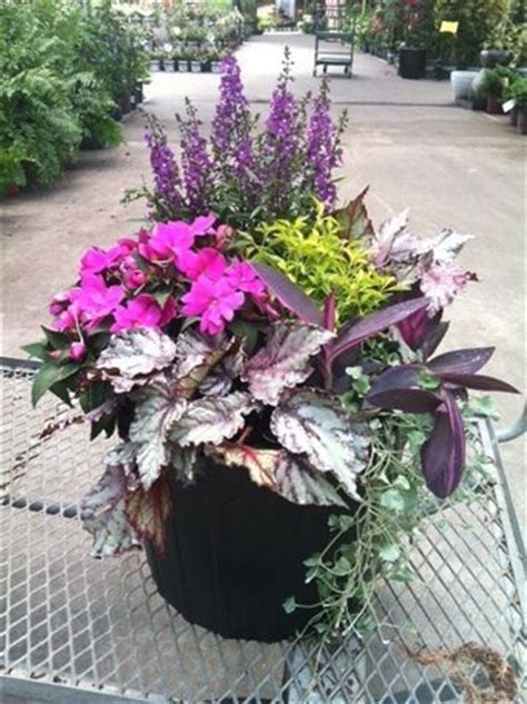 partial sun container garden with angelonia sunpatien rex begonia altenanthera setcreasea