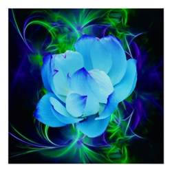 Blue Lotus Flower Meaning Blue Lotus Flower And Its Meaning Posters Zazzle