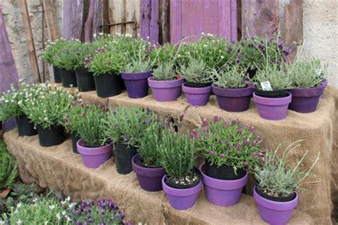 passende pflanzen zu lavendel lavendel pflanzen dr schweikart