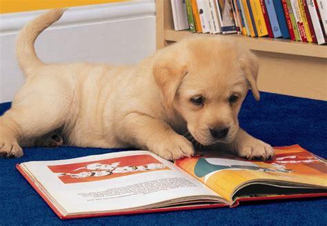 cutest puppies book animals reading gliterature