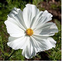 high heat plants high heat flowers for hot summer areas gardening pinterest