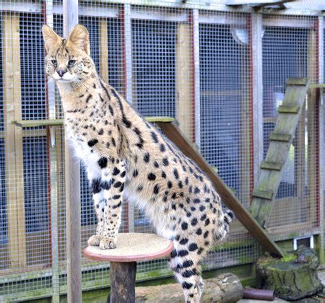 l posts for sale uk servals for sale uk autos post