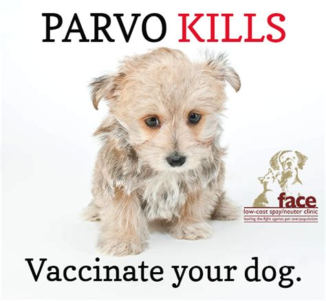 parvo vaccine for dogs low cost spay neuter clinicparvo virus tips to keep your safe low
