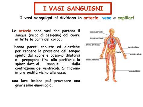 i vasi sanguigni l apparato circolatorio ppt scaricare