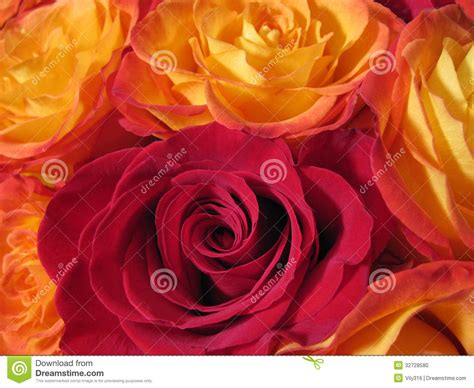 this bed is on fire with passion and love fire yellow roses stock photo image 32728580