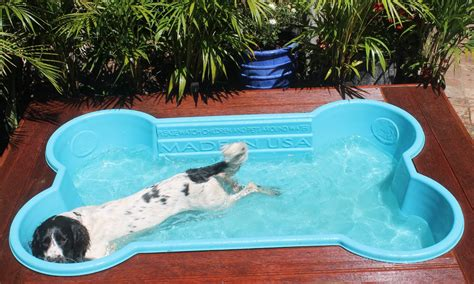 bone pool australian lover preventing heat stress in dogs