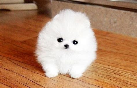 worlds cutest puppy cutest puppy in the world my wishlist puppys the o jays and the world