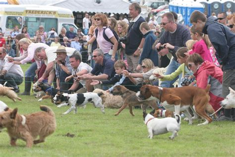 chatsworth house dogs a week of prizes win two tickets to chatsworth country