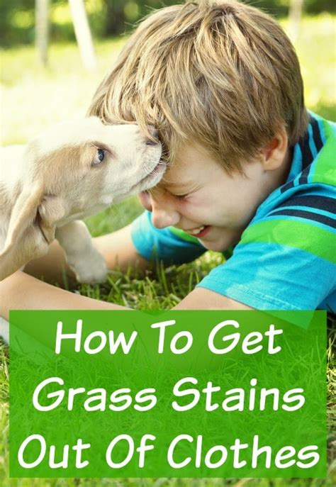 how to get stains out of a suede couch how to remove grass stains out of shoes style guru
