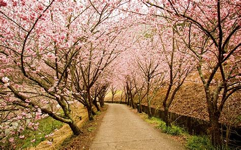 imagenes korea japon jap 243 n en primavera 10 paisajes espectaculares