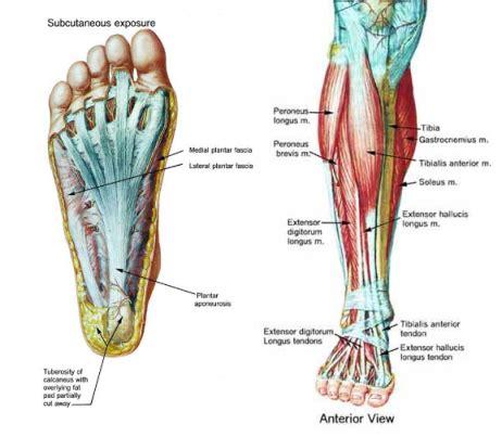 sore legs and after standing 191 por qu 233 me duelen las piernas al saltar la cuerda