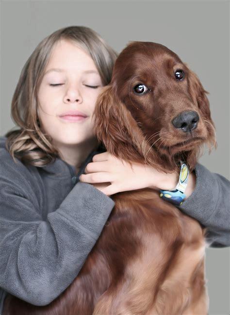 setter dog family 110 best irish setters images on pinterest