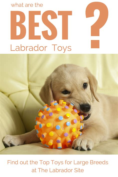 toys for puppies best toys for large breeds