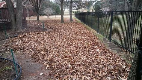 backyard cleanup services lawn and landscape maintenance lawn and