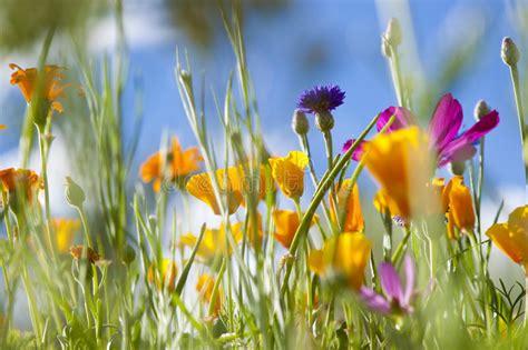 imagenes flores salvajes flores salvajes del resorte foto de archivo imagen de