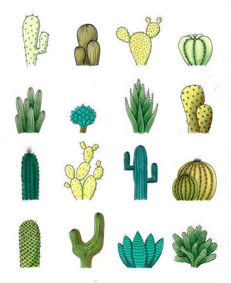 cactus doodle 25 best ideas about cactus drawing on cactus