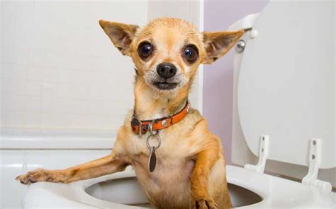 how to stop diarrhea in dogs dogsbreedscenter best breeds pictures information and reviews
